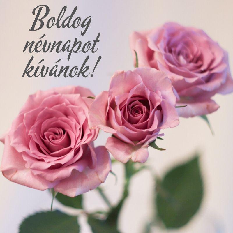 idézetek névnapra szerelmemnek Névnapi virágok   Születésnapi köszöntők